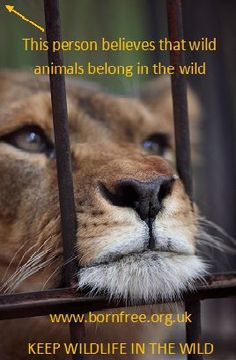 Wildlife belongs in the wild. BORN FREE. Rescued wildlife as in abused or injured, should be handled in such a way that rehabilitation and possible reintroduction to the wild is possible.