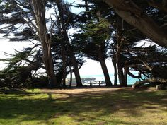 Cypress Grove-Mendocino