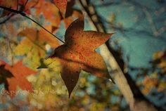 Fall Leaves Nature Photograph Autumn Tree Teal Blue Orange Yellow Dreamy Leaves Fall Wall Decor Large Print 8x12