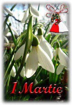 Happy Birthday, Christmas Ornaments, Holiday Decor, Spring, Pretty, Plants, Photography, Inspiration, Instagram