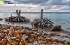 These stumps used to be beautiful pine trees. (Photo and caption courtesy Mamang Sorbetero/National Geographic Your Shot
