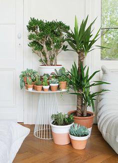 un petit îlot de plantes, pour recréer un peu de verdure dans votre intérieur…