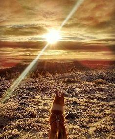 Last rays of the sun. Sunset in Ylläs, Finland. Picture by @irmeliiina