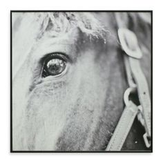 Derby Square 13-Inch x 13-Inch Horse Photo Art - BedBathandBeyond.com