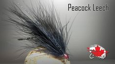 bead head slight leeches black micro leeches 6 size 12