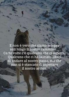 Risultati Immagini Per Lupo Solitario Frasi Pensieri Wolf