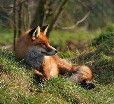 my favorite fox photographs