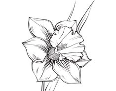 Narcissus Flower Tattoo Ideas For 2020 Narcissus Flower Tattoos, Daffodil Tattoo, Birth Flower Tattoos, December Flower Tattoo, Wildflowers Tattoo, Flower Drawing Images, Flower Line Drawings, Flor Tattoo, Candle Tattoo