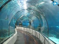 Barcelona Aquarium 30-45 mins, 20 euros Stand on a conveyor belt that winds through glass tunnels beneath stingrays and sharks swirling in the waters above