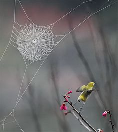 ~ spider web and bird ~ awesome photo! ~