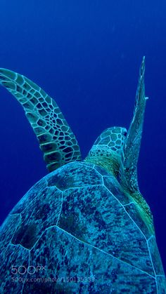 Following turtle from behind. No touch! OLYMPUS DIGITAL CAMERA          by hmntecg-mail
