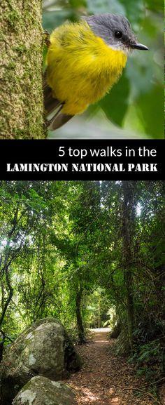 5 top walks in the Lamington National Park   Australia