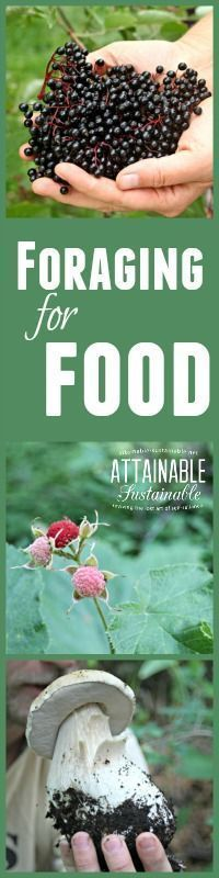 Foraging for food doesn't have to be a last ditch survival effort. There's LOTS…
