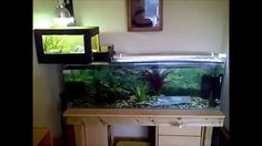 4 FOOT Turtle Tank! Home Made ABOVE Tank Basking Area!!