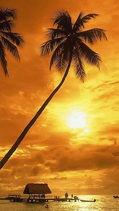 palm trees on a beautiful beach at sunset