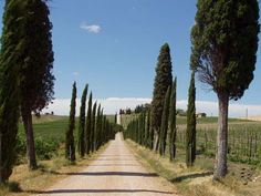 Vineyards in Chianti, Italy