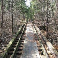 Wharton State Forest, NJ