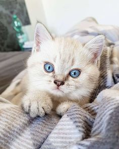 12+ Cute Kitten Photos That Make You Day - #cat #kittens #pets #animals #cute #funny #paw #best #memes #photo #catfood #kitty #best #funniest #love #cute cats #purr #wildlife #fashion #treats #toy