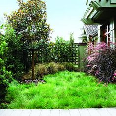 a No-Mow Lawn Plant a No-Mow Lawn: how to replace your thirsty lawn with a casual, easy-care meadow.Plant a No-Mow Lawn: how to replace your thirsty lawn with a casual, easy-care meadow. Low Water Landscaping, Front Yard Landscaping, Landscaping Ideas, Landscaping Software, Landscaping Edging, Natural Landscaping, Landscaping Company, Backyard Patio, Landscape Design