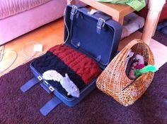 DIY Cat bed in an old suitcase - Kullan Koto