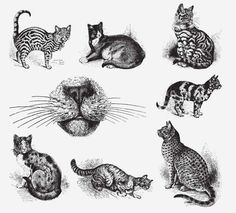 CATS Free Vintage Vector Printable | https://www.freevintagevectors.co/single-post/cats