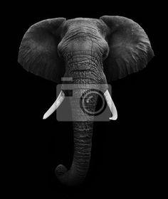 Wall Mural african elephant isolated - elephant • PIXERSIZE.com