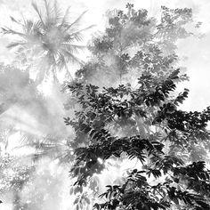 Jugando con la bruma (en blanco y negro)  Os presentamos una serie de fotografías de Hengki Koentjoro (Indonesia).  Hengki expresa sus emociones y estado de ánimo recurriendo siempre al blanco y negro.  La ausencia de color de sus fotografías transforma los paisajes naturales en algo abstracto y misterioso.  Una forma diferente y hermosa de ver la naturaleza.
