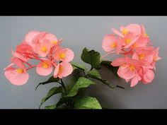 ABC TV | How To Make Dragon Wing Begonia Paper Flower From Crepe Paper - Craft Tutorial - YouTube