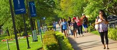 Learn more about what Lynn University has to offer Boca Raton area students... Lynn University, Home And Away, Colleges, Virtual Tour, Sidewalk, Students, Florida, Tours, Beach