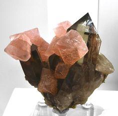 Fluorite with Smoky Quartz - Mont Blanc, Chamonix, Haute-Savoie, Rhone-Alpes, France Size: 10.0 cm