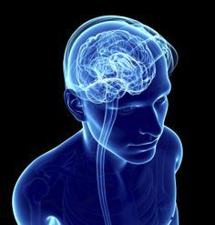 Game Changer: Your Brain and Lymphatic System Connect Through Just-Discovered Vessels!