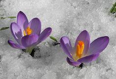 http://www.nikon-fotografie.de/vbulletin/picture.php?albumid=9212&pictureid=340530