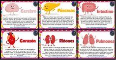 Human Body Activities, Human Body Anatomy, Medical Anatomy, Kids Study, Elementary Science, Book Journal, Biology, Education, Books