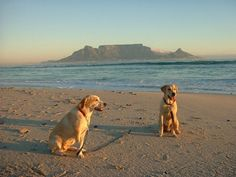 Bring the pooches for a walk and enjoy some fresh summer sun in Cape Town. #capetownbeaches #dogwalkscapetown
