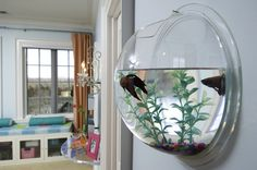 Wall fish-tank........ SO cool!!!! Got it at work by my desk.