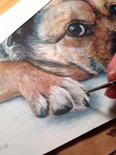 How to paint a dog portrait. I study detail when I paint. I never would've noticed this much fur between a dog's paws. Acrylic Painting Techniques, Watercolor Techniques, Art Techniques, Painting Tutorials, Painting Fur, Painting & Drawing, Animal Paintings, Animal Drawings, Art Pictures