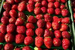 Located in Ancaster Ontario. Raspberry, Strawberry, Farmers Market, Pedestrian, Fresh, Marketing, Hamilton, Health, Distance