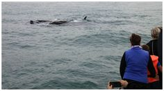 Whale watchers on a Southern Right Charters expedition earlier this week