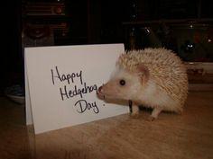 Happy Hedgehog Day