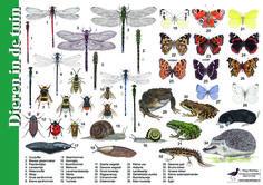Herkenningskaart / zoekkaart Dieren in de tuin
