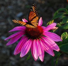 Perennials July-August 2015 at Cady Falls Nursery