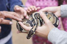 Mão na Cobra. Instituto Butantan