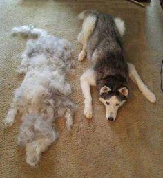 Sélection de la semaine, #WTF, #Cosplay, #Geek, #FunFacts, #Design, #Photographie, #Vrac - Comment peigner son chien ?