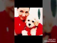 Mr bailey and magi ❤️🐶❤️ Corgi, Youtube, Animals, Corgis, Animales, Animaux, Animal, Animais, Youtubers