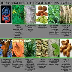 Foods That Help The Gastrointestinal Tracts Raw For Beauty, Health And Beauty Tips, Health And Wellness, Improve Gut Health, Acacia Gum, Healing Herbs, Alternative Health, Natural Medicine, Health Remedies