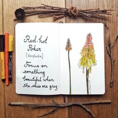 Sketch of the day no 898 in my moleskine art journal: red hot poker.