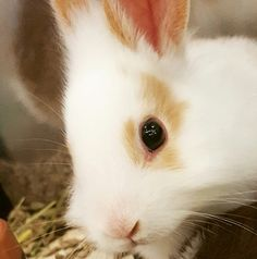 Look at those little bunny eyes!