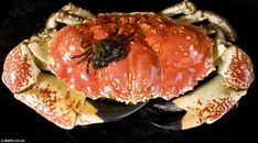 Tasmanian King crab with British Shore crab on back for scale!