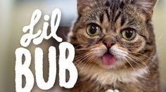10 Lil Bub Facts You Need to Know
