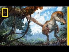 Dinosaur's Feathered Tail Found Remarkably Preserved in Amber | National Geographic - YouTube